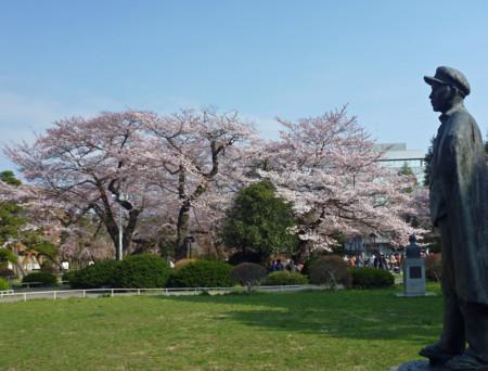 東北大 桜