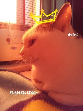 20140208_091846 - コピー