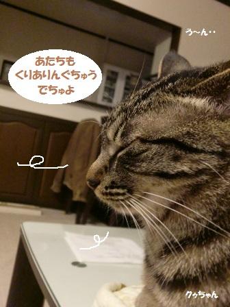 CIMG6034 - コピー