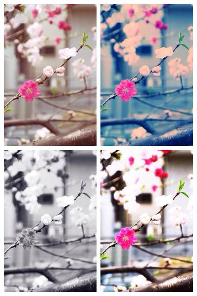 桜_convert_20140313171738