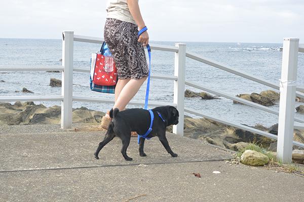 海辺をお散歩♪