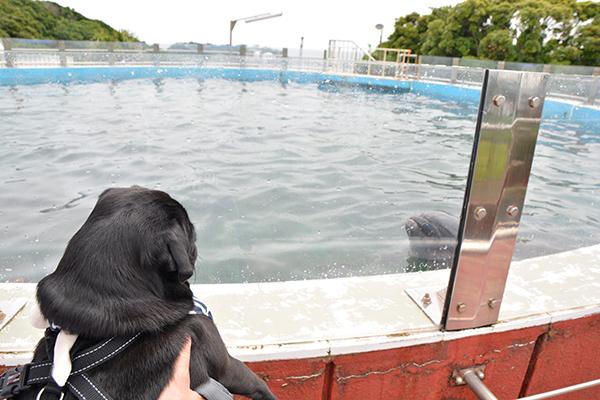 イルカさんともご挨拶