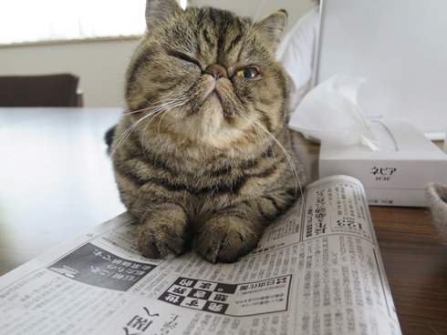 2)毎朝新聞読んでるでつー