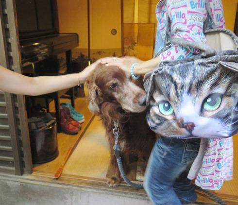 24)ぼくより大きいネコが??