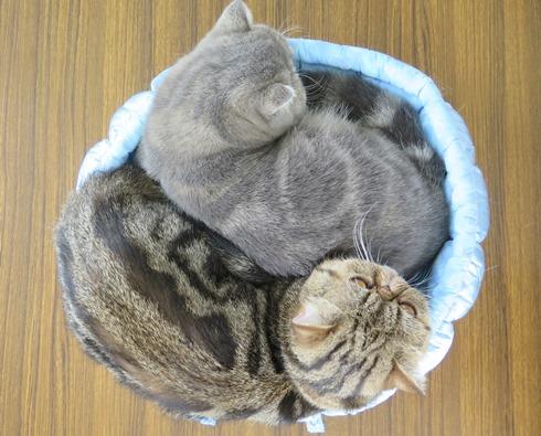 7)平井さんのベッドちゃん
