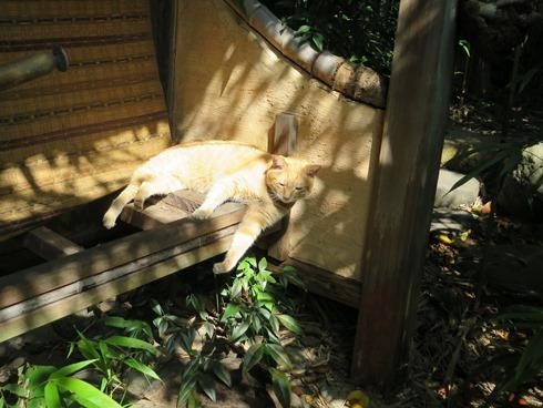 16)お庭で日向ぼっこ