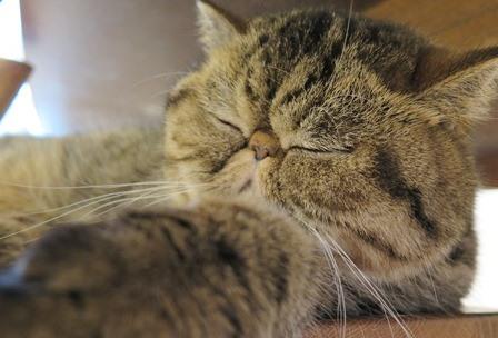 12)はちゅねの寝顔