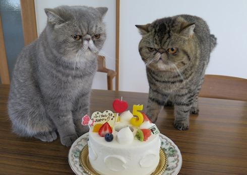 10)今食べたでちね?怒