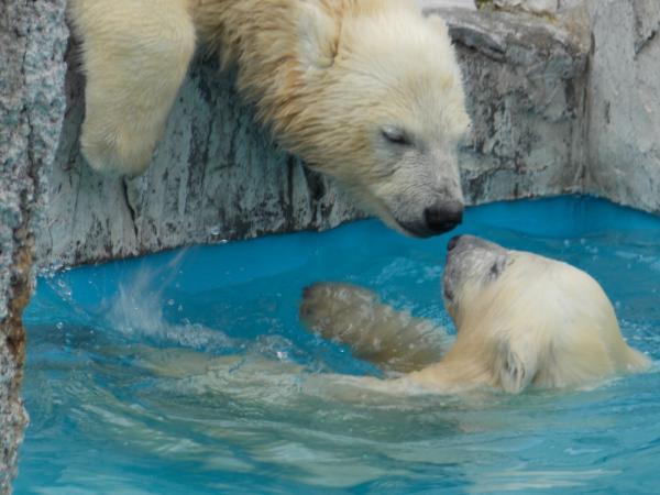 動物園6月+030_convert_20140212235517
