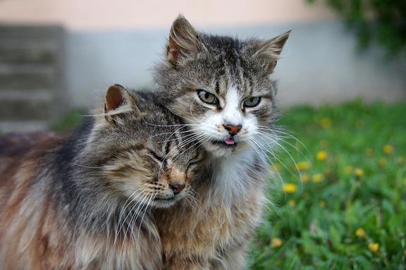 リア充な猫