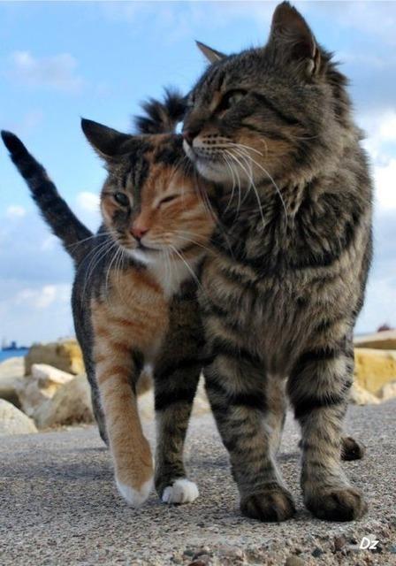 リア充な猫2