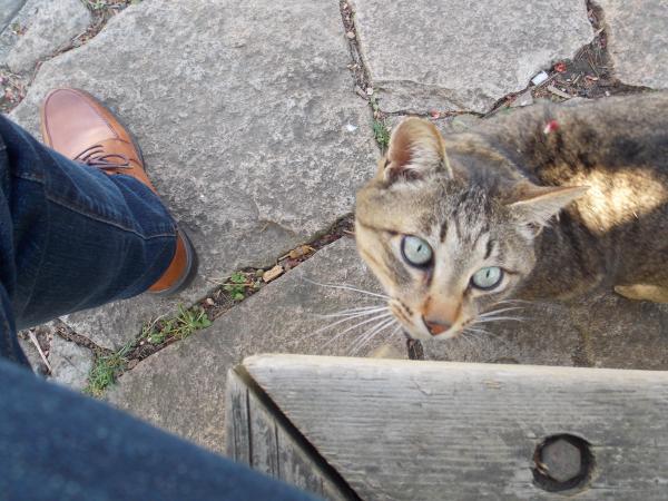 野良猫2+005_convert_20140522233450