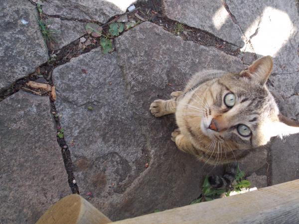 野良猫2+013_convert_20140522233520