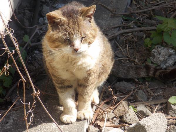 野良猫2+029_convert_20140529003349
