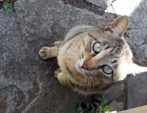 野良猫2+013_convert_20140608215124