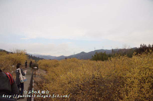 DSC_0084_201403052254018c3.jpg