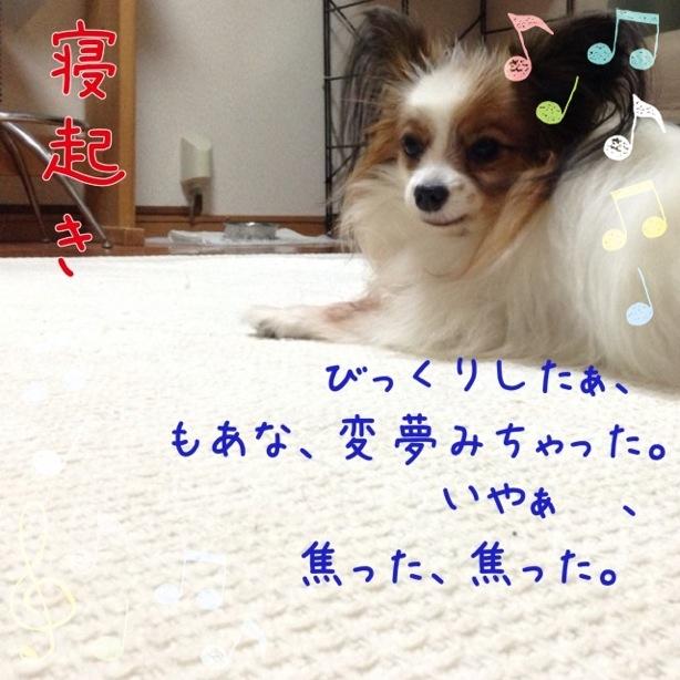 IMG_0116.jpg