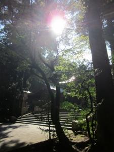 弥彦神社4