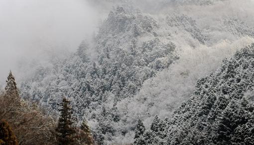 3983小雪14361