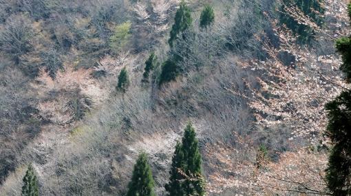 6961餅の木1442411