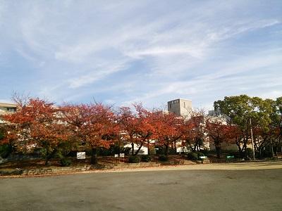 豊島野公園03