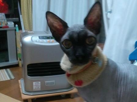 温風器の前