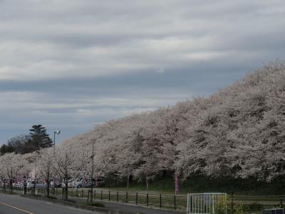 幸手久喜お花見ツアー2014_12