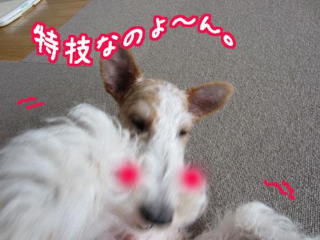 3_20140405152434914.jpg