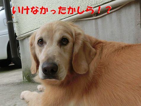 e_2014083009154519e.jpg