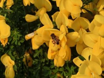 140507散歩蜂