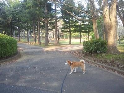 リキとお散歩