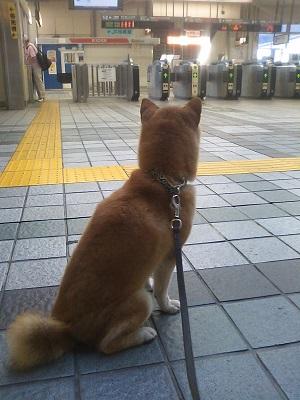 忠犬リキ公
