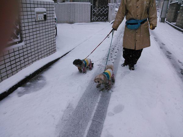 雪の日のお散歩小