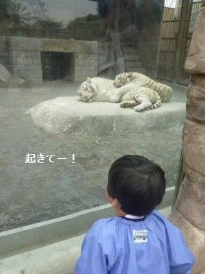 幼稚園遠足2014④