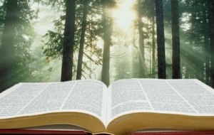 bible-light.jpg
