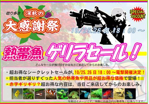 2014summer-sale_20141024221056de4.jpg