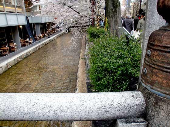 三条の川辺桜並木