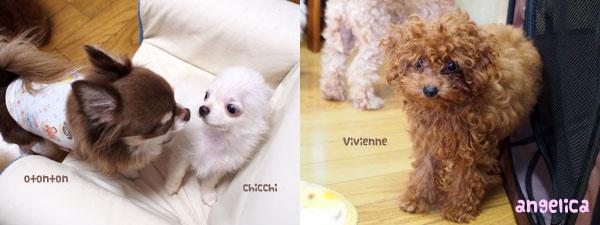 チッチくん&ヴィヴィちゃん