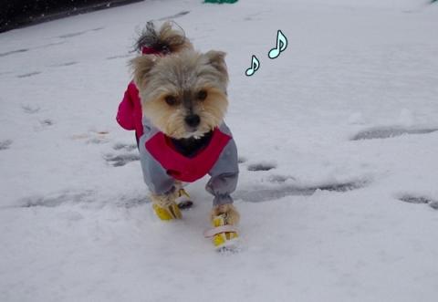 雪2014⑤