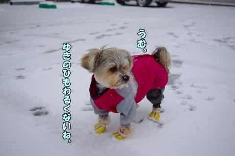 雪2014④