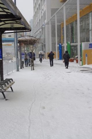 雪2014②