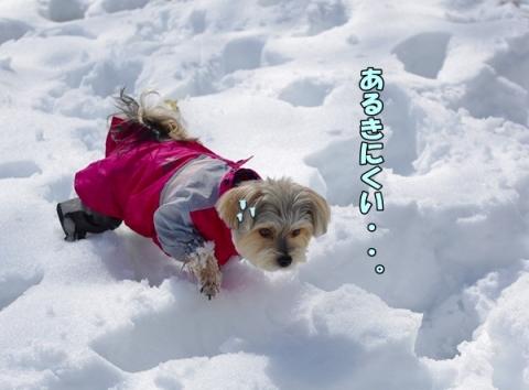 雪2014その2②