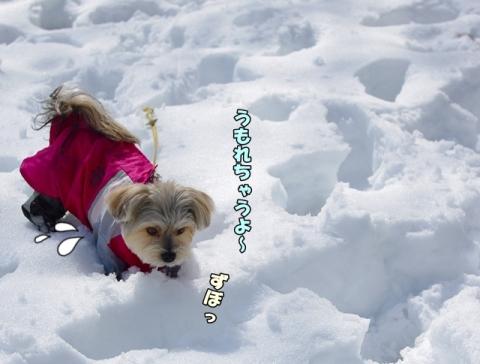雪2014その2①