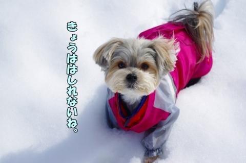 雪2014その2⑩