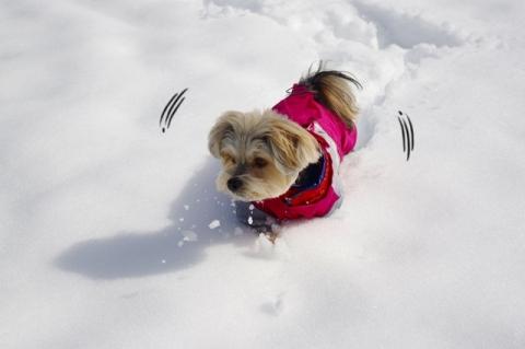 雪2014その2⑨