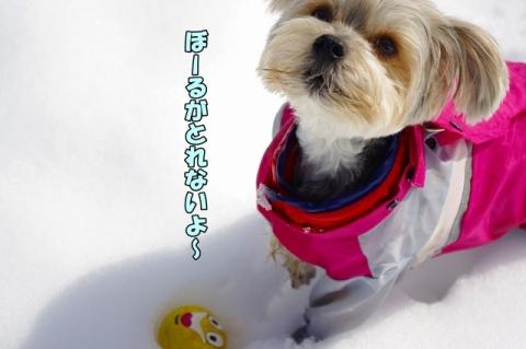 雪2014その2⑧