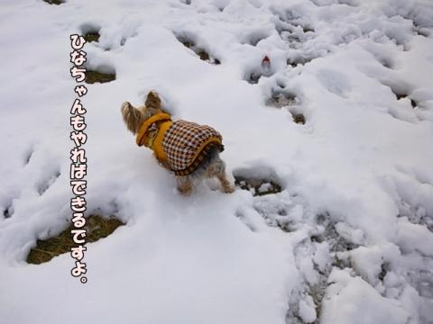 ひなと雪2014④
