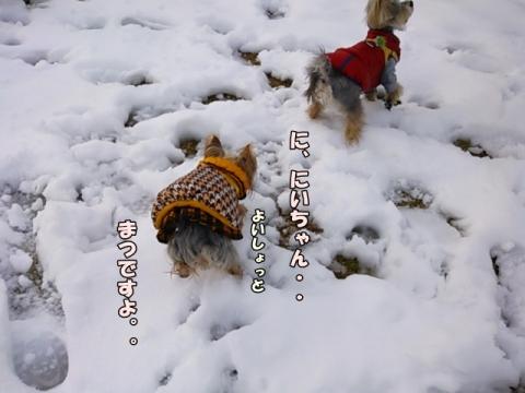 ひなと雪2014③
