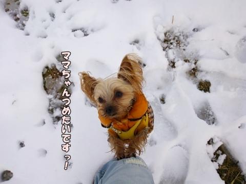 ひなと雪2014②