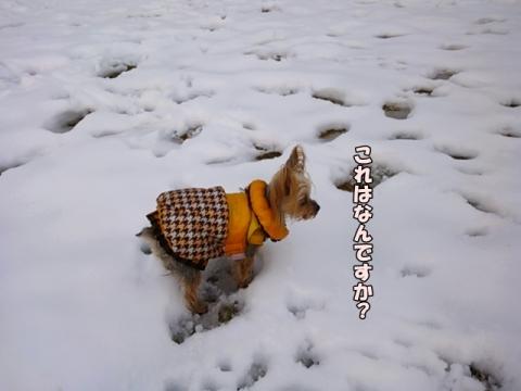 ひなと雪2014①